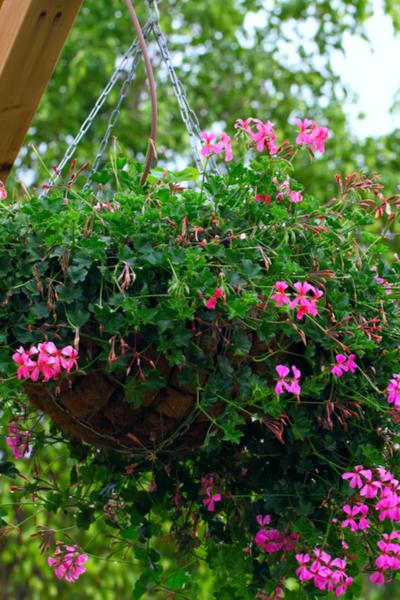 keep hanging basktes beautiful
