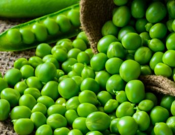 how to save spring seed crops - pea seeds