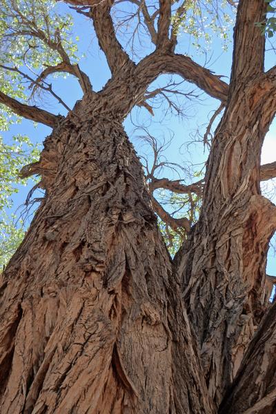 trees to avoid