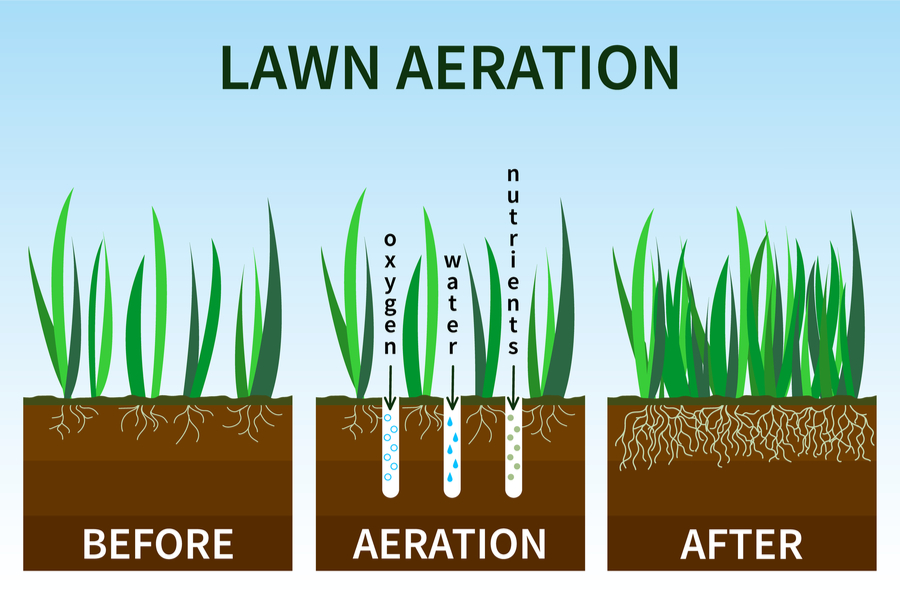 how aeration works in a lawn