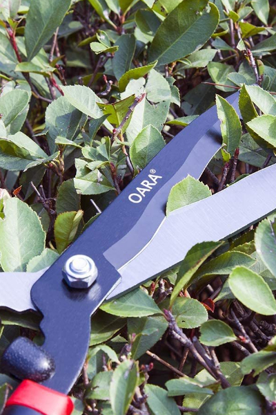 hedge shears