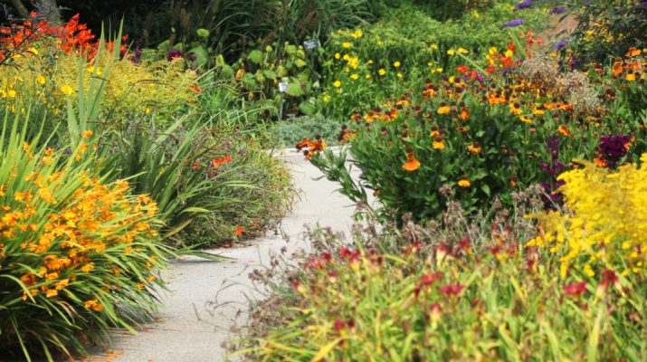 when to cut back perennials