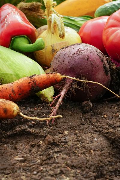 prepare a garden for winter