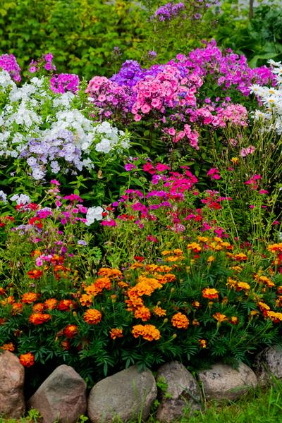 perennial flowerbeds full