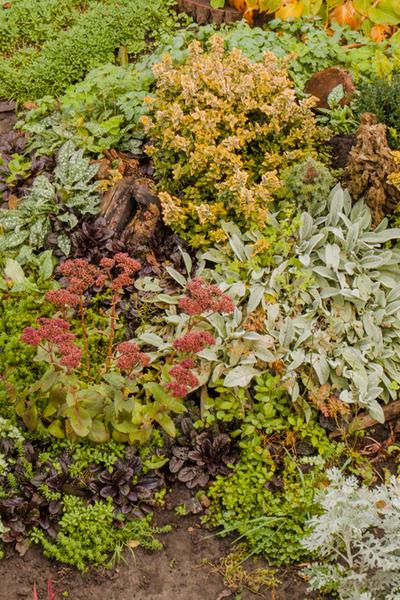 mulching fall flowerbeds