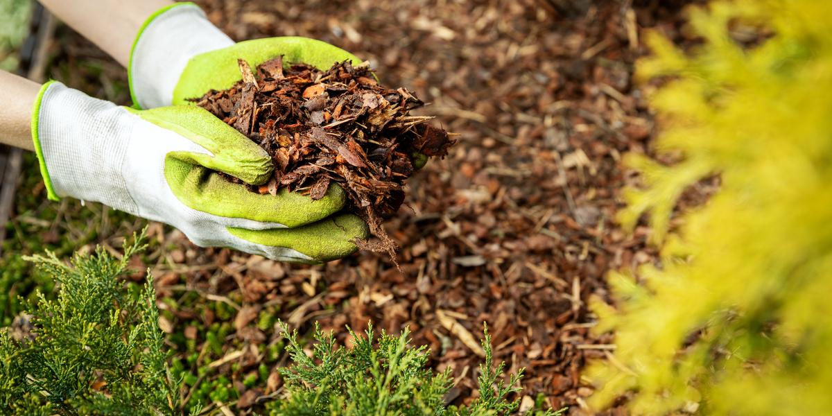 fall mulch