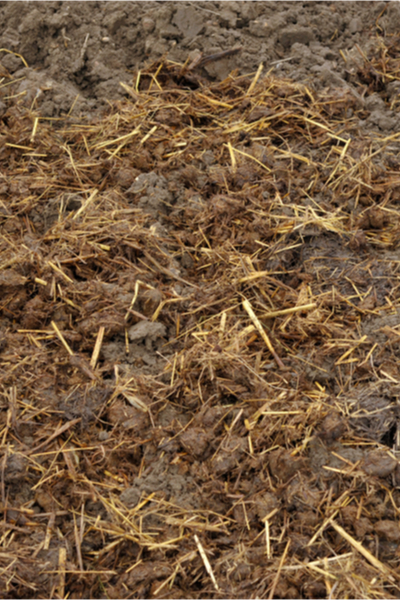 layer of manure - preparing a garden for winter