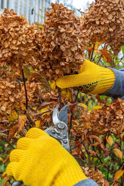 fall pruning