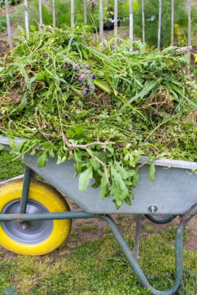 weeds in the garden