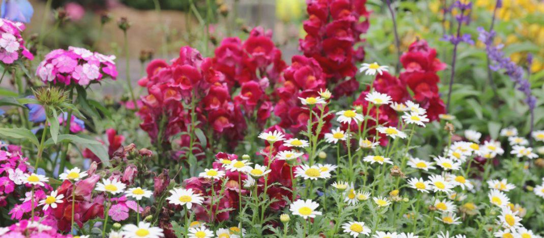perennial flower swaps