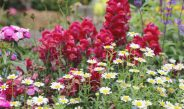 Perennial Flower Swaps – How To Share Plants With Friends This Fall!