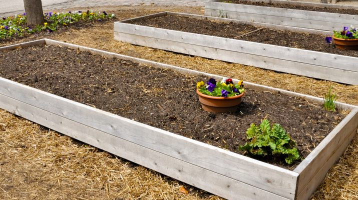 recharge raised bed soil