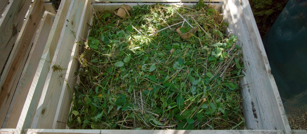 weeds in a compost pile