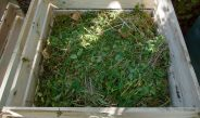 Should You Put Weeds In A Compost Pile?