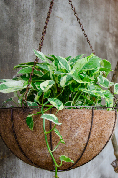 hanging basket from house plants