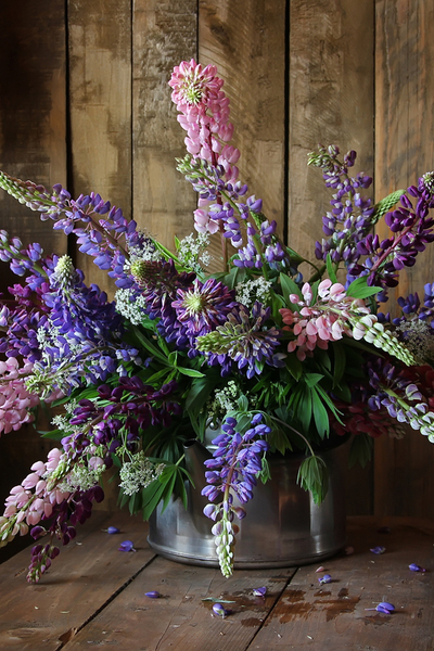 cut flowers - lupines