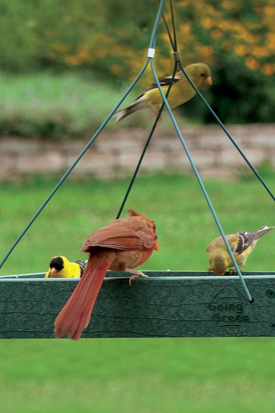 cardinal bird feeder platform