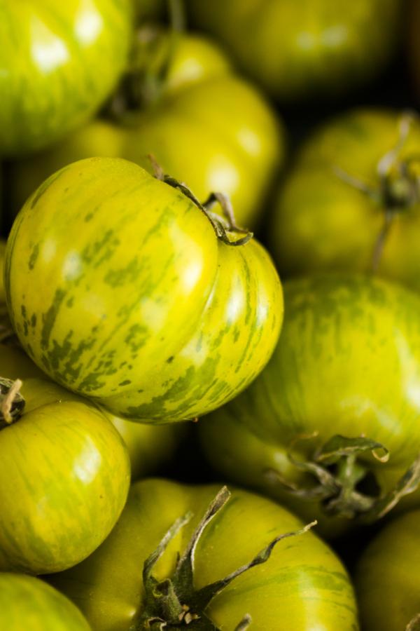 unique tomato plants