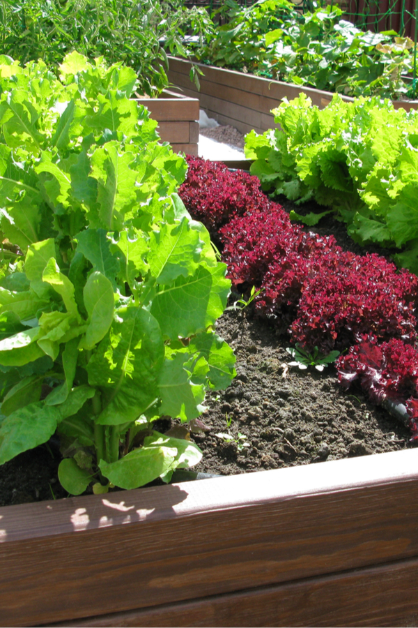 how to grow in raised beds
