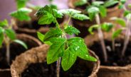 When Is The Right Time To Start Vegetable Seeds Indoors?