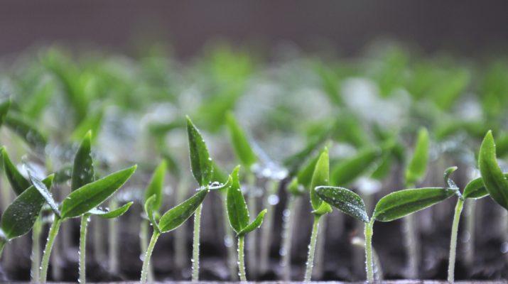 LED lights to start seeds indoors