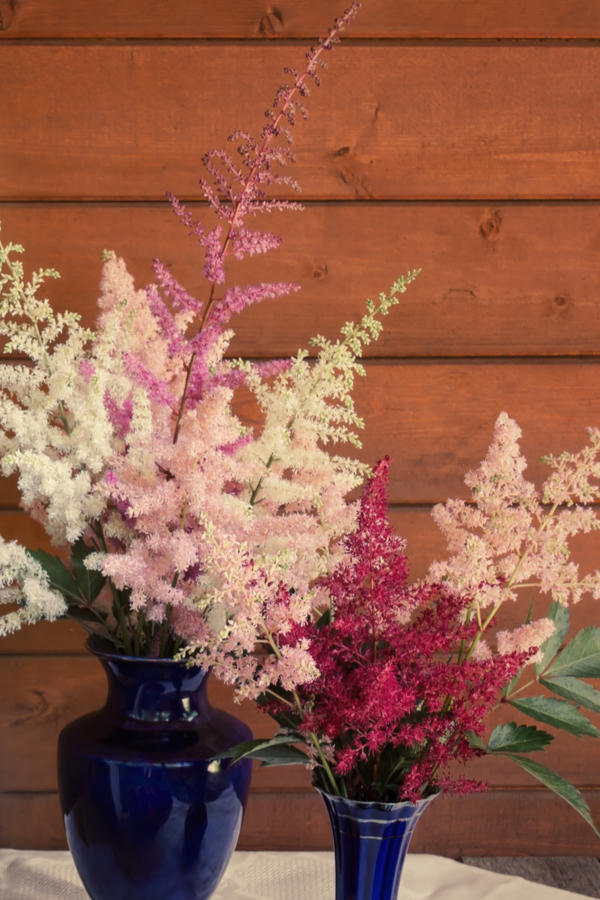 growing astilbe for cut flowers