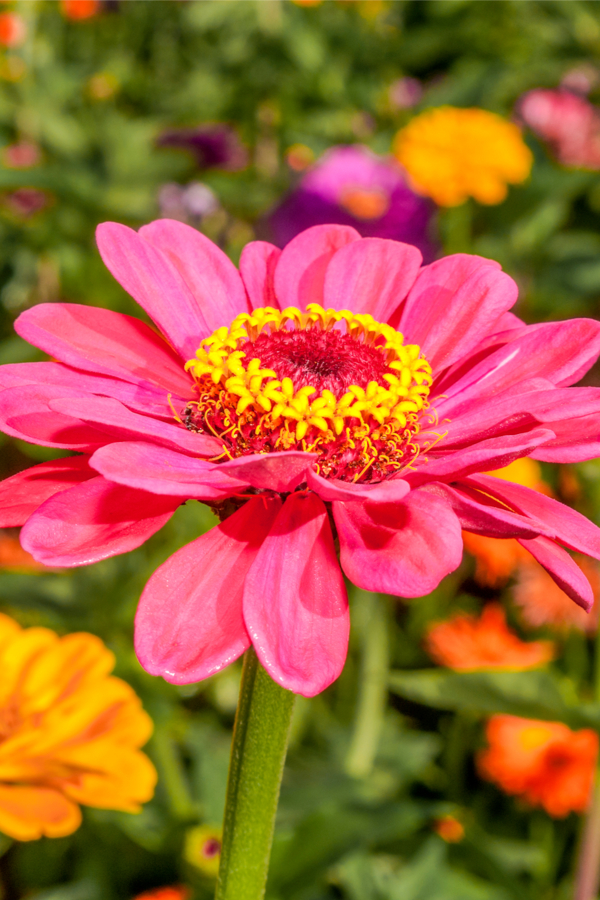 blooms of annuals