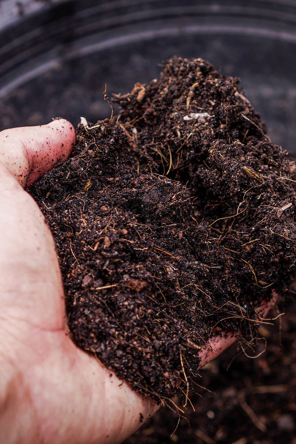 the best potting mix for growing vegetables