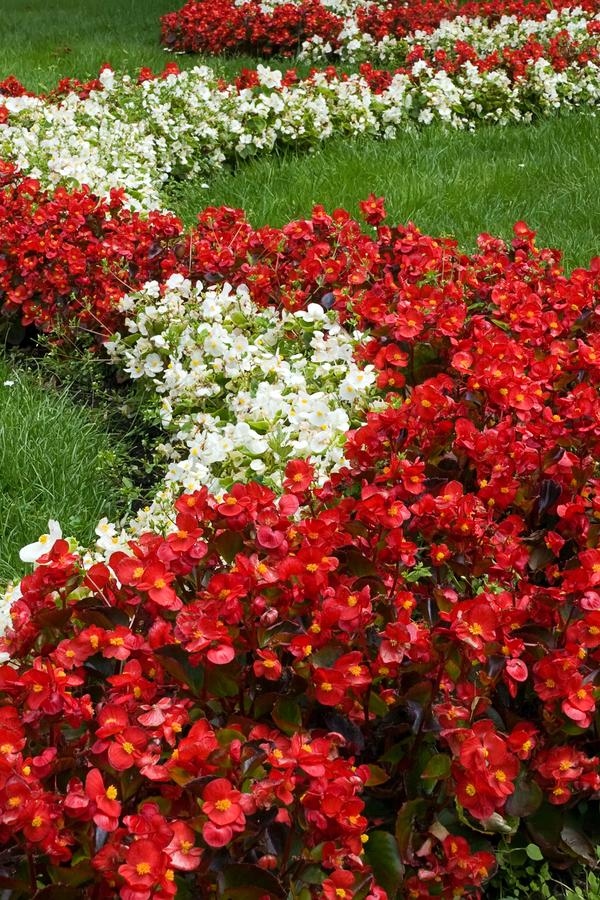 flowerbeds - sun