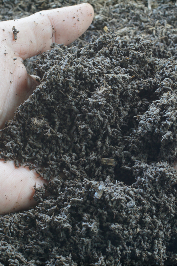 fertilizing with worm castings