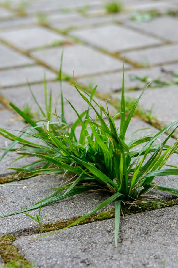 weeds in a sidewalk