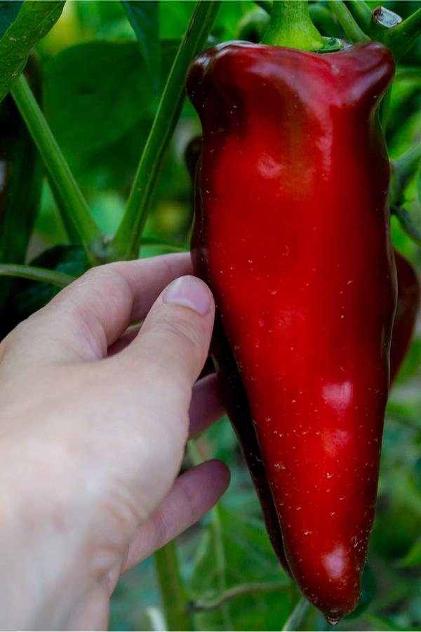 best harvest your vegetable garden