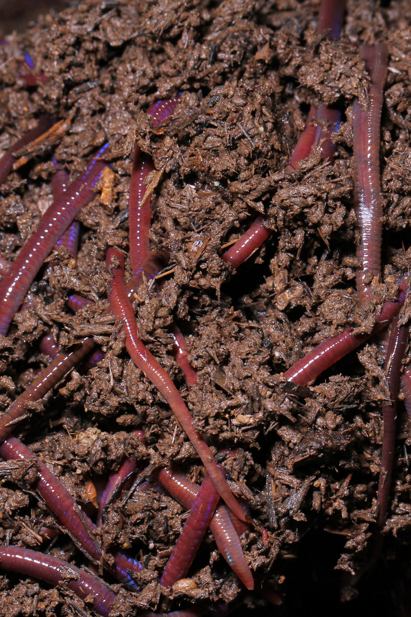 creating worm castings