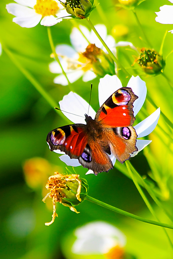 attracting birds, bees and butterflies