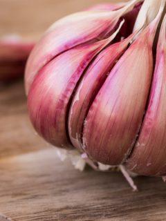 how to plant hardneck garlic