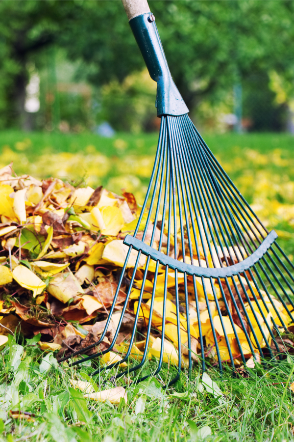 removing leaves from the lawn