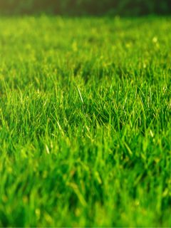 must do fall lawn chores