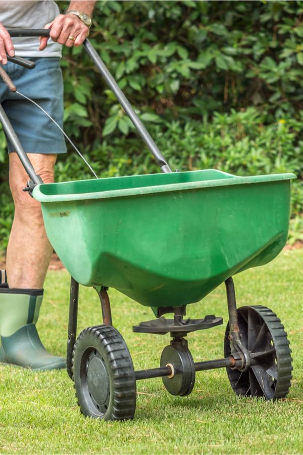 fall lawn chores - overseeding