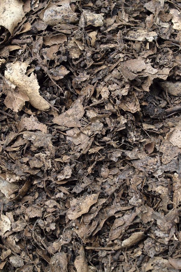 shredding leaves