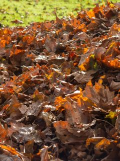what leaves to compost