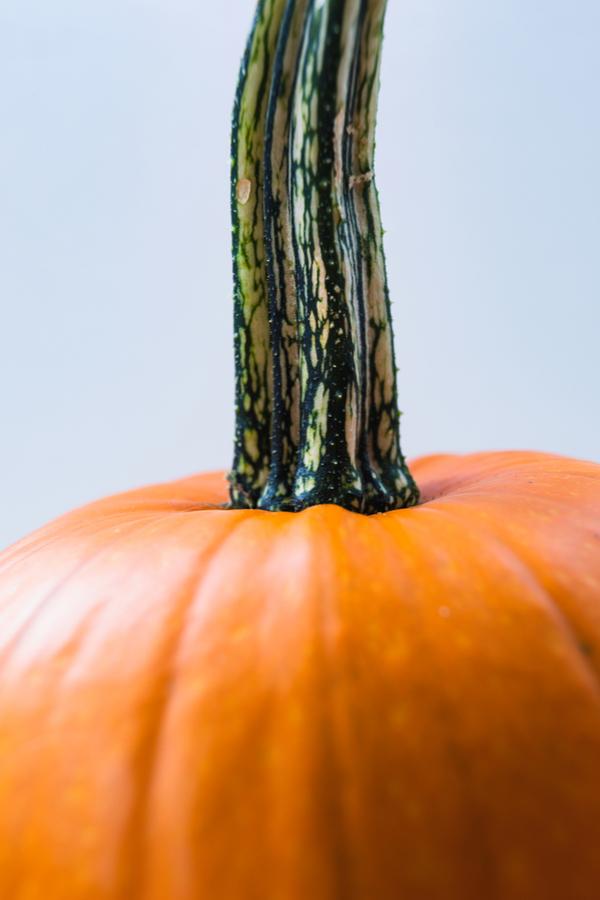 making pumpkins last